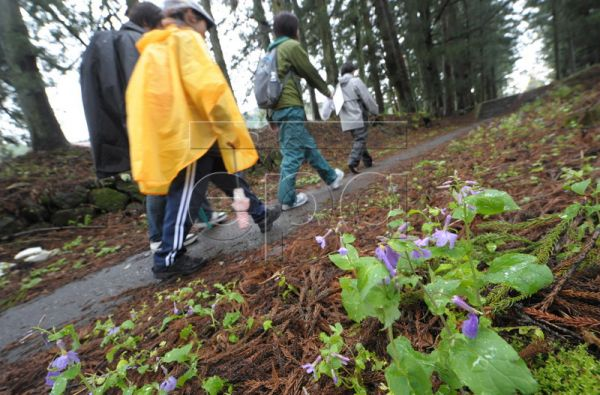 A group of hikikomori, Japanese social dropouts, walks past a patch of blooming violets along the ancient Nikko road on the fifth and final day of a 160 kilometer walk to the mountain temple town of Nikko, Japan, 28 April 2010. The term hikikomori refers to young people who refuse to leave their house, isolating themselves in their homes and from society for a period exceeding six months. In extreme cases hikikomori remain in isolation for years or even decades. According to some researchers, there is an es