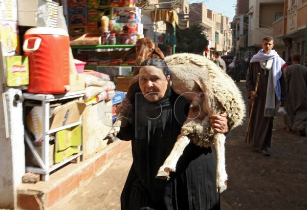 An Egyptian woman carries a sheep on her shoulders ahead of the Eid al-Adha celebrations at a local market in Kerdasa, Giza, Egypt, 08 November 2010. Muslims worldwide prepare to celebrate Eid-al-Adha on 16 November 2010 by the sacrificial killing of goats, cows or camels. The slaughter commemorates the biblical story of Abraham, who was on the verge of sacrificing his son to obey God's command when God interceded by substituting a ram in the child's place. EPA/KHALED ELFIQI