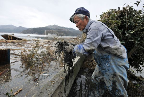 Japanese tsunami survivor, Makoto Endo, 69, a scallop and silver salmon fisherman, removes mud as he helps to clean the house of his friend Hiroshi Sasaki (not pictured) in Ishinomaki, Miyagi Prefecture, northern Japan, 22 March 2011. Endo was preparing to work with his friends Sasaki and Watanabe on 11 March 2011 when a magnitude 9.0 earthquake hit. The men climbed to safety as a tsunami flooded the fishing town of Ishinomaki, sweeping away houses and cars. Endo's house, his four fishing boats, his cars an